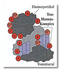 Ton-Humus-Komplex